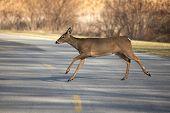 Deer Croosing Road