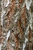 Bark Texture Background Pattern Crack Old Brown For Design