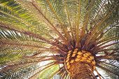 palm tree, close-up view