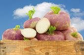 freshly harvested spring turnips (Brassica rapa) and a cut one in a wooden crateagainst a blue sky with clouds