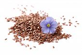 picture of flax plant  - Flax seeds with flowers - JPG