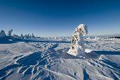 Landscape - Winter Mountains