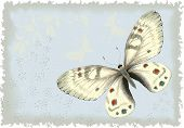Background with butterfly. All objects are isolated and separated to layers.