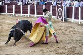 Spanish bullfighter Manuel Jesus El Cid with the capote or cape bullfighting a bull of nearly 650 kg