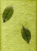 Natural Paper With Leaves