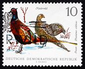 Postage Stamp Gdr 1968 Ring-necked Pheasants, Game Bird