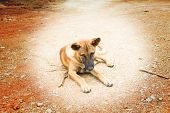 pic of stray dog  - the Starving stray dog  is homesick in thailand - JPG