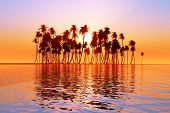 foto of tropical plants  - sun over coconut palms island on tranquil tropic sea - JPG