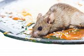 stock photo of mouse trap  - Mouse captured in a mouse trap isolate on white - JPG