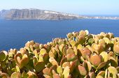 View With Succulents Of Thira.