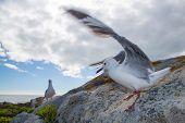 Seagull Balancing On A Rock
