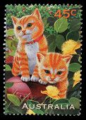 AUSTRALIA - CIRCA 1996: a stamp printed in the Australia shows Kittens, Pets, circa 1996