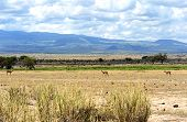 Antelope Grant