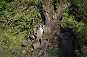 foto of inhumane  - Cat lying on a tree trunk in the spring sunshine - JPG