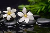 Two gardenia flower and plant on pebbles �¢�?�?wet background