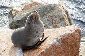 Narooma Seal