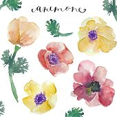 Watercolor Anemones. Watercolor Flowers. Spring Flowers