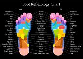 image of descriptive  - Foot reflexology chart with accurate description of the corresponding internal organs and body parts - JPG