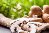foto of agaricus  - Fresh brown whole uncooked Agaricus mushrooms on a hessian sack 