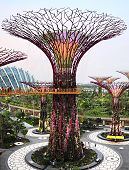 Tree At Gardens By The Bay