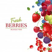 Bright  berries  over white background