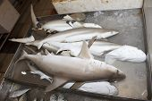 TEKKA SEAFOOD MARKET, SINGAPORE - MAY 27 2014: Sharks at fish market. Dead sharks are sold at market