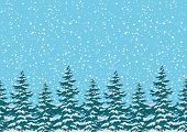 pic of blue spruce  - Seamless background - JPG