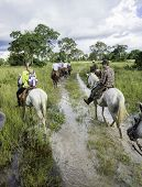 MATO GROSSO, BRAZIL - CIRCA MARCH 2014 - Tourists ride horses in the Pantanal. The Pantanal is the world's largest tropical wetland areas located in Brazil , South America