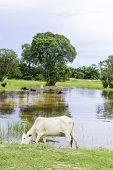 Pantanal in Brazil