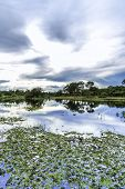 The nature in Pantanal, Brazil