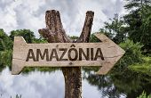 "image of rainforest  - ""Amazonia"" (In portuguese - Amazon Rainforest) wooden sign on a forest background - JPG"