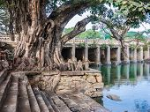 Ancient Banyan and Bridge.