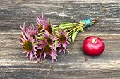Medical Herbs Echinacea Flowers Bunch And Red Apple