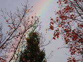Faint Rainbow behind autumn trees