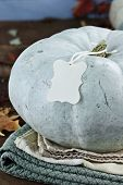 Blue Or Teal Colored Pumpkin With Blank Tag