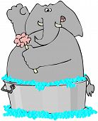 Elephant In A Washtub