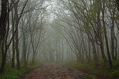 dense wood on Popov island near Vladivostok