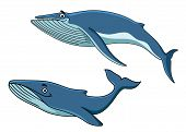 picture of whale-tail  - Blue cartoon whales swimming underwater with their tails - JPG