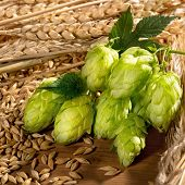 stock photo of raw materials  - raw material for beer production on the table - JPG