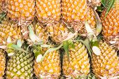 picture of south east asia  - Exotic fruits and vegetables in South East Asia - JPG