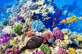 stock photo of shoal fish  - Wonderful and beautiful underwater world with corals and tropical fish - JPG
