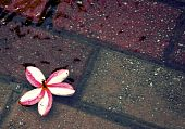 Flower and bricks