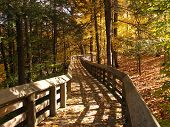 Boardwalk in the Fall