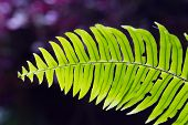 picture of fern  - Beautiful Green Fern in tropical forests with bokeh background - JPG