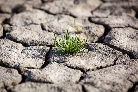 foto of drought  - Died and cracked soil - JPG