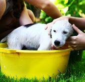 image of wash-basin  - kids wash stray white puppy in yellow basin on the summer garden background - JPG