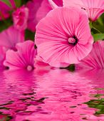 Flowers In A Garden