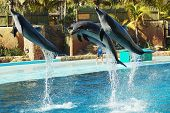 Dolphin Flight #2