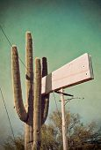 Cactus And Vintage Sign