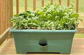 Container Gardening - Vegetables